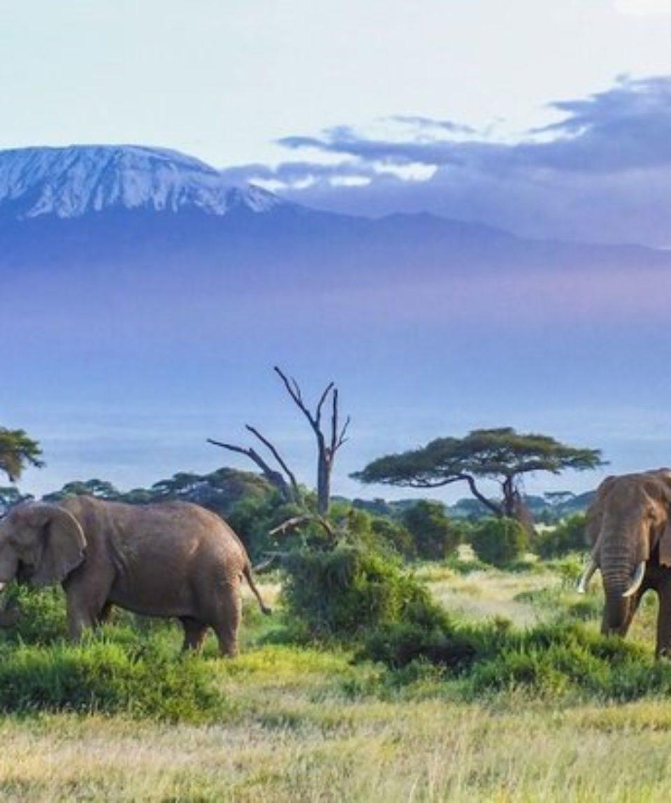 Tanzanie 3